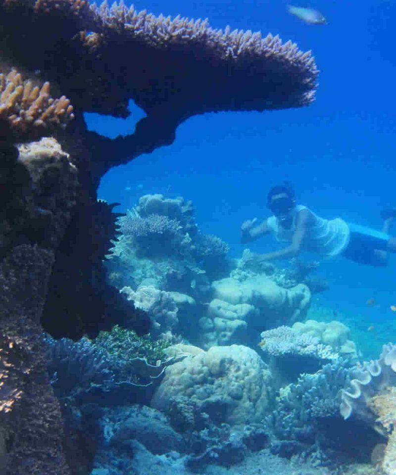 Open Trip Pulau Derawan