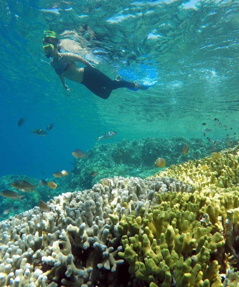 Paket Wisata Pulau Pahawang Dari Ketapang